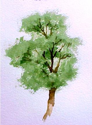 how to draw tree in water color