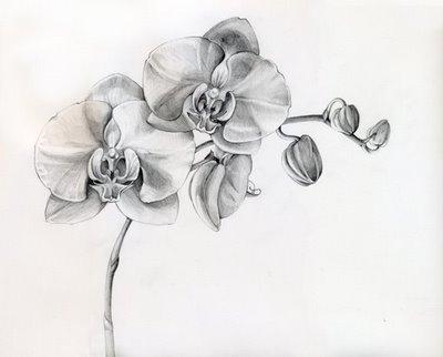floral-pencil-art