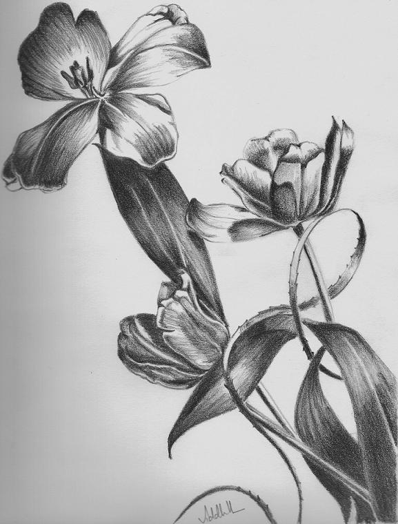 Floral Pencil Drawings Fine Art Blogger