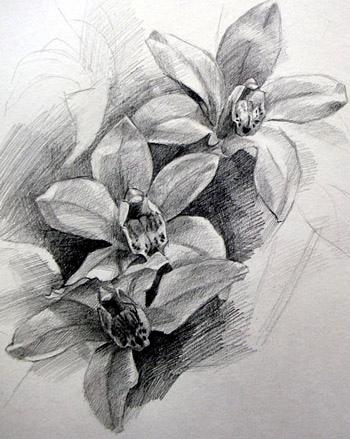 Floral Pencil Drawings - Fine Art Blogger  Floral Pencil D...