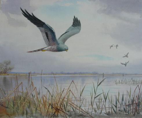 bird artist