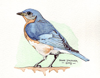 - bluebird-watercolor-painting