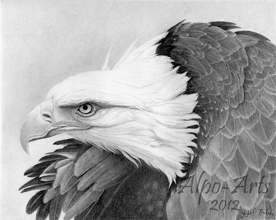 Eagle Pencil Drawings http://steveblairdesigns.com/bald eagle/