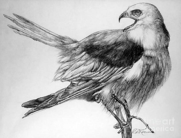 realistic eagle drawing