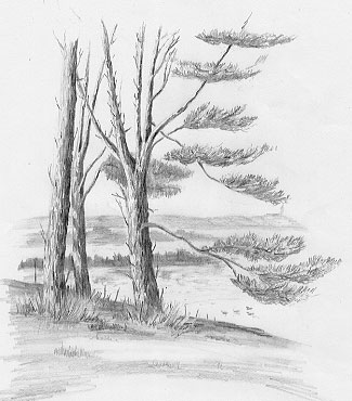 Pencil Drawings Of Trees besides  on corvette ta ray