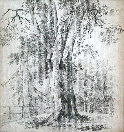 tree-drawings Tree Pencil Drawing