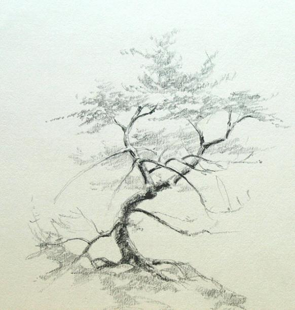 how to draw pine trees with pencil