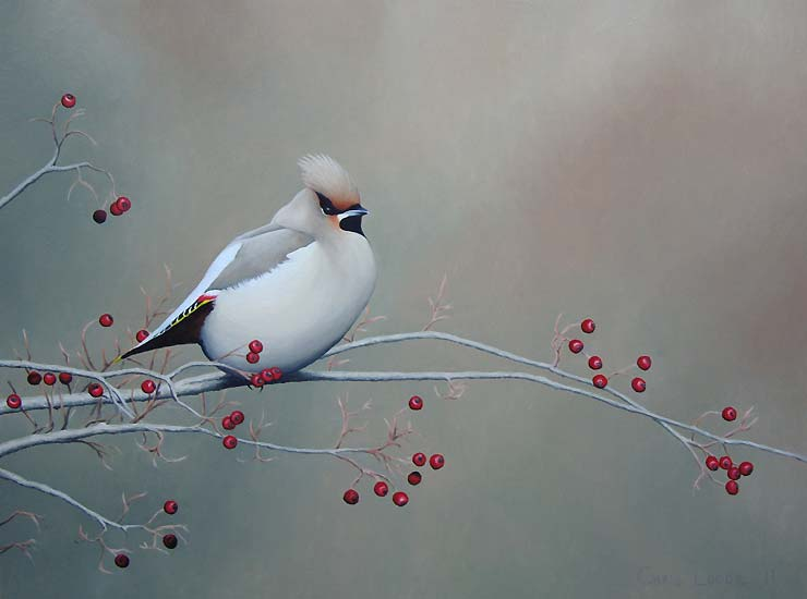 realistic-bird-oil-painting-chris-lodge