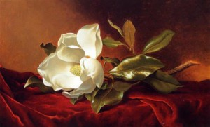 martin-johnson-heade-magnolia